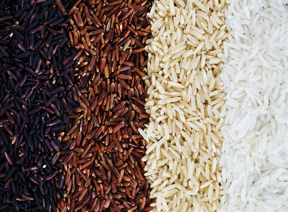 Il Riso: le principali varietà e proprietà