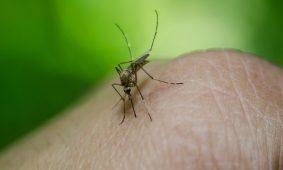 I rimedi naturali contro le zanzare!